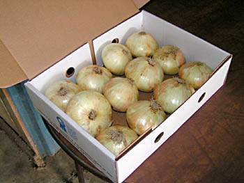 Onions in Boxes Ready for Shipping